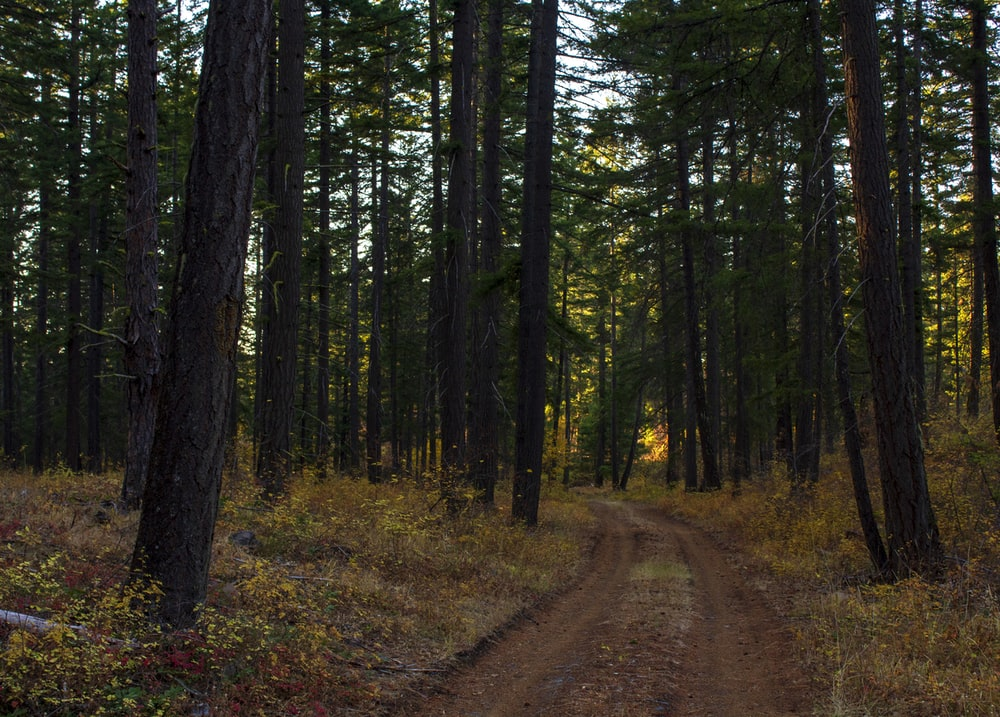 brown dirt road in between green trees during daytime