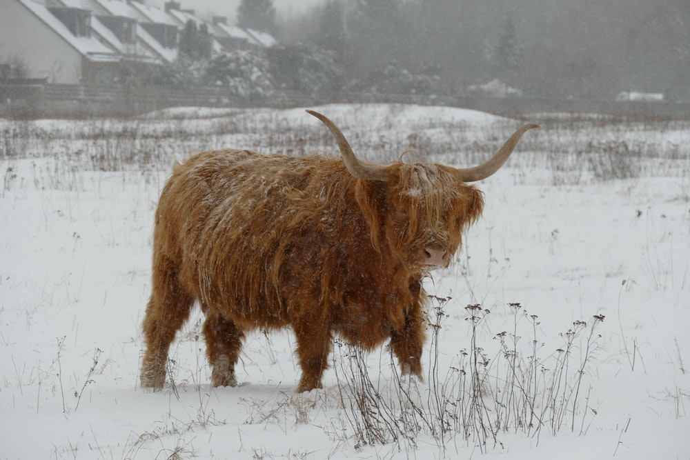 brown animal on snow covered ground during daytime