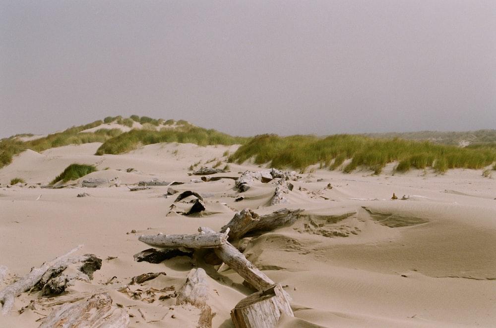 brown wood log on white sand during daytime