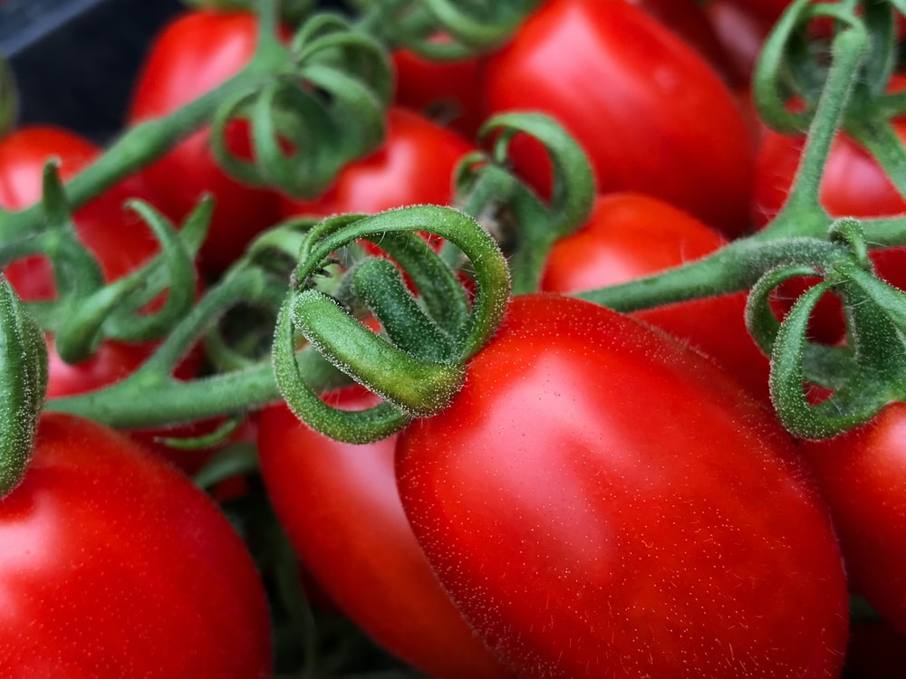 red tomato fruit in close up photography