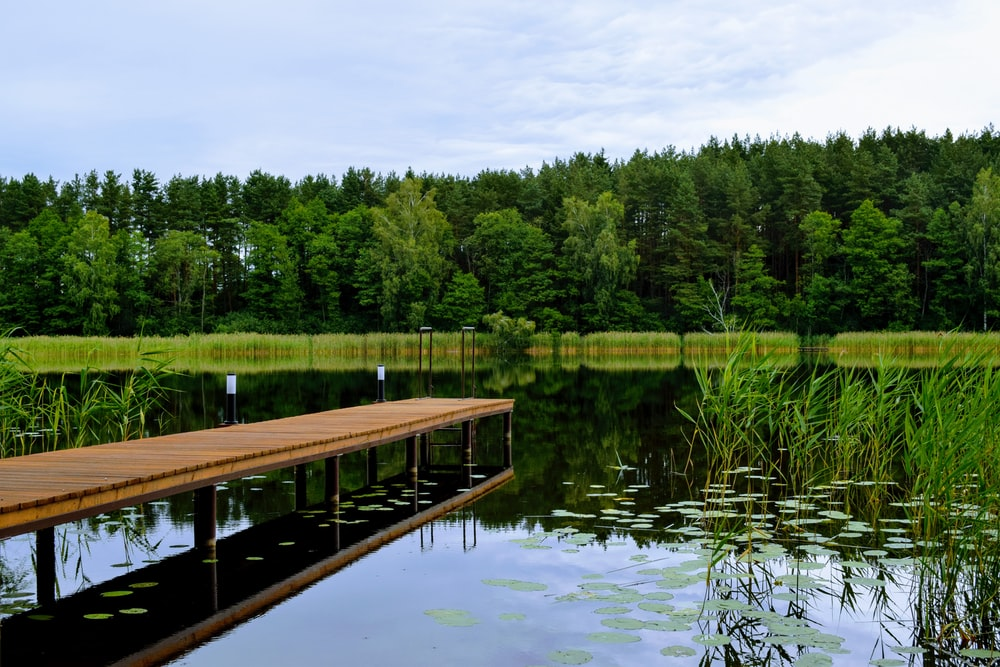 brown wooden dock on lake surrounded by green trees during daytime