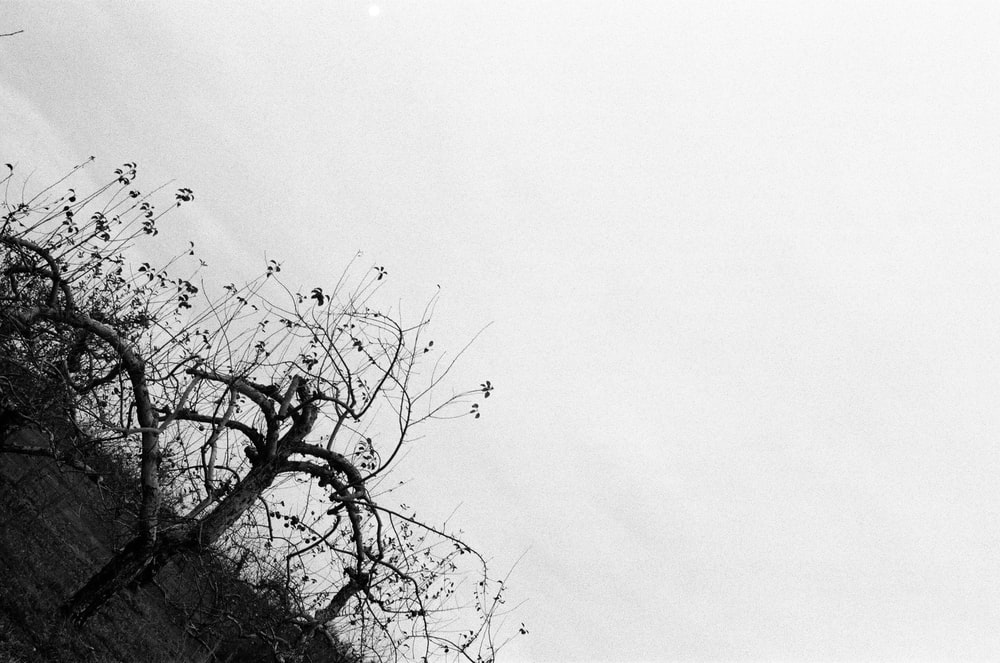 grayscale photo of leafless tree