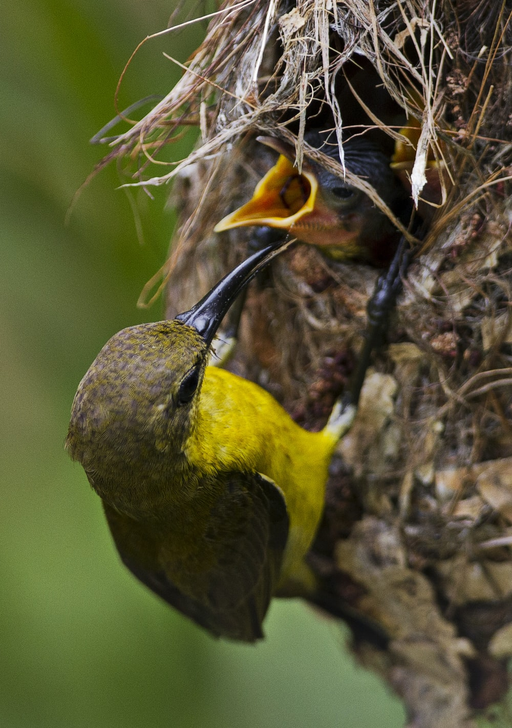 yellow and black bird on brown tree branch