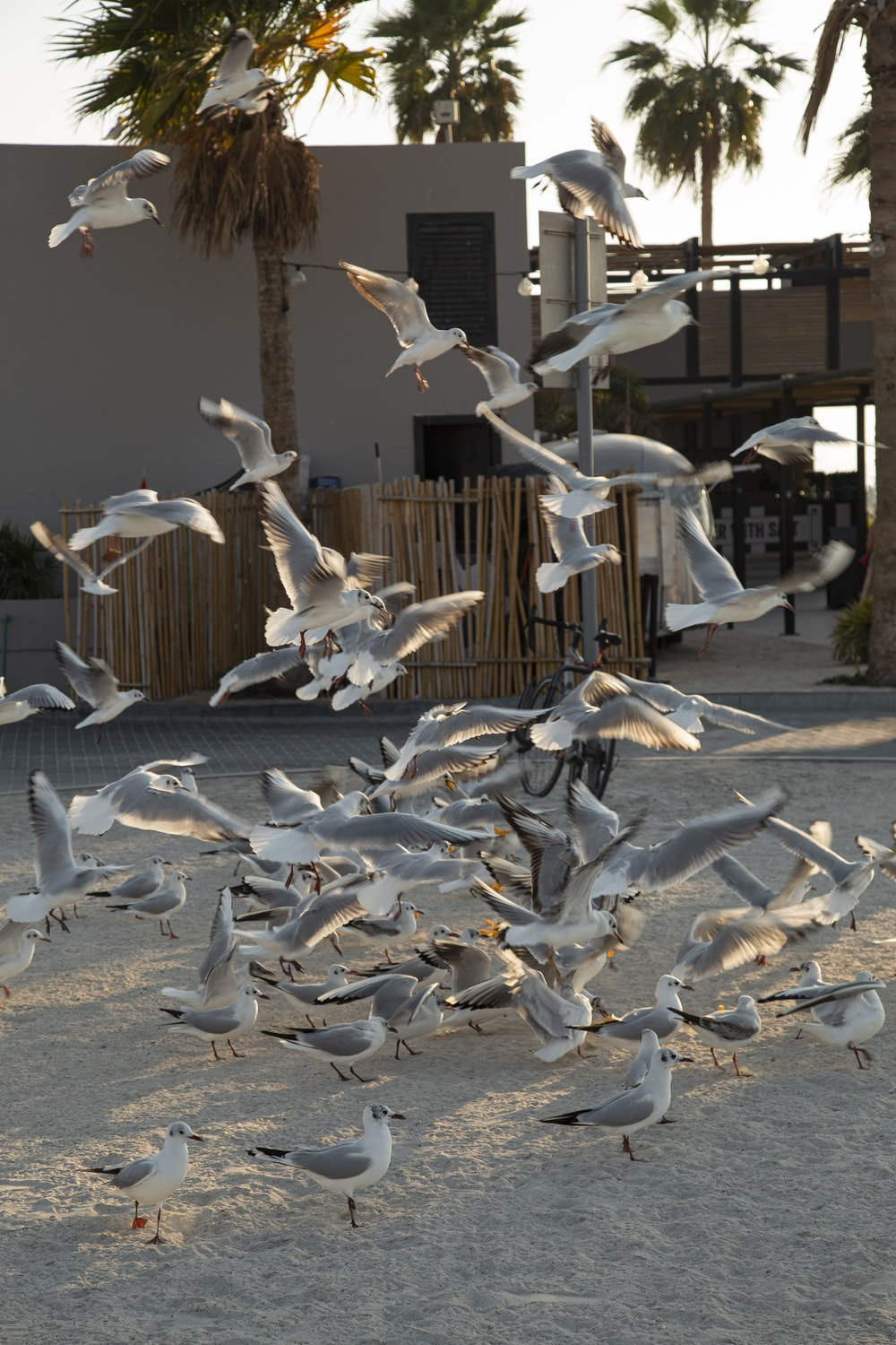 flock of white birds flying over the brown wooden house during daytime