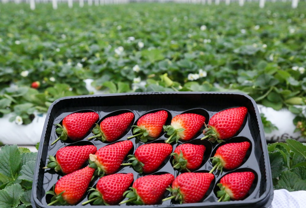 strawberries in black plastic container