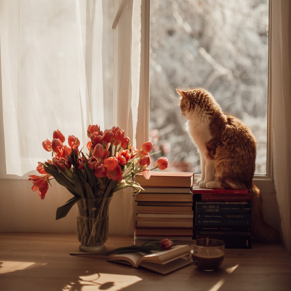 orange tabby cat on black book