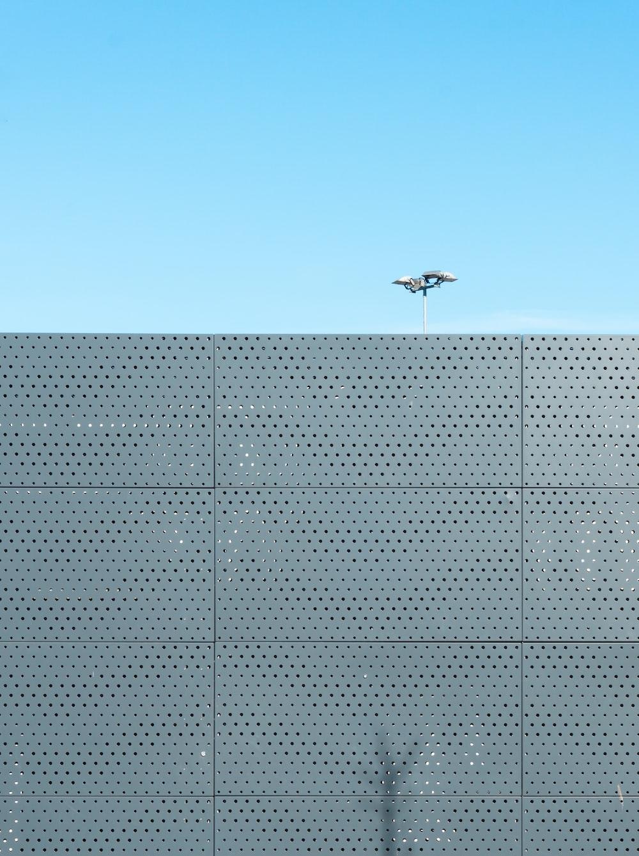 white bird flying over gray building during daytime