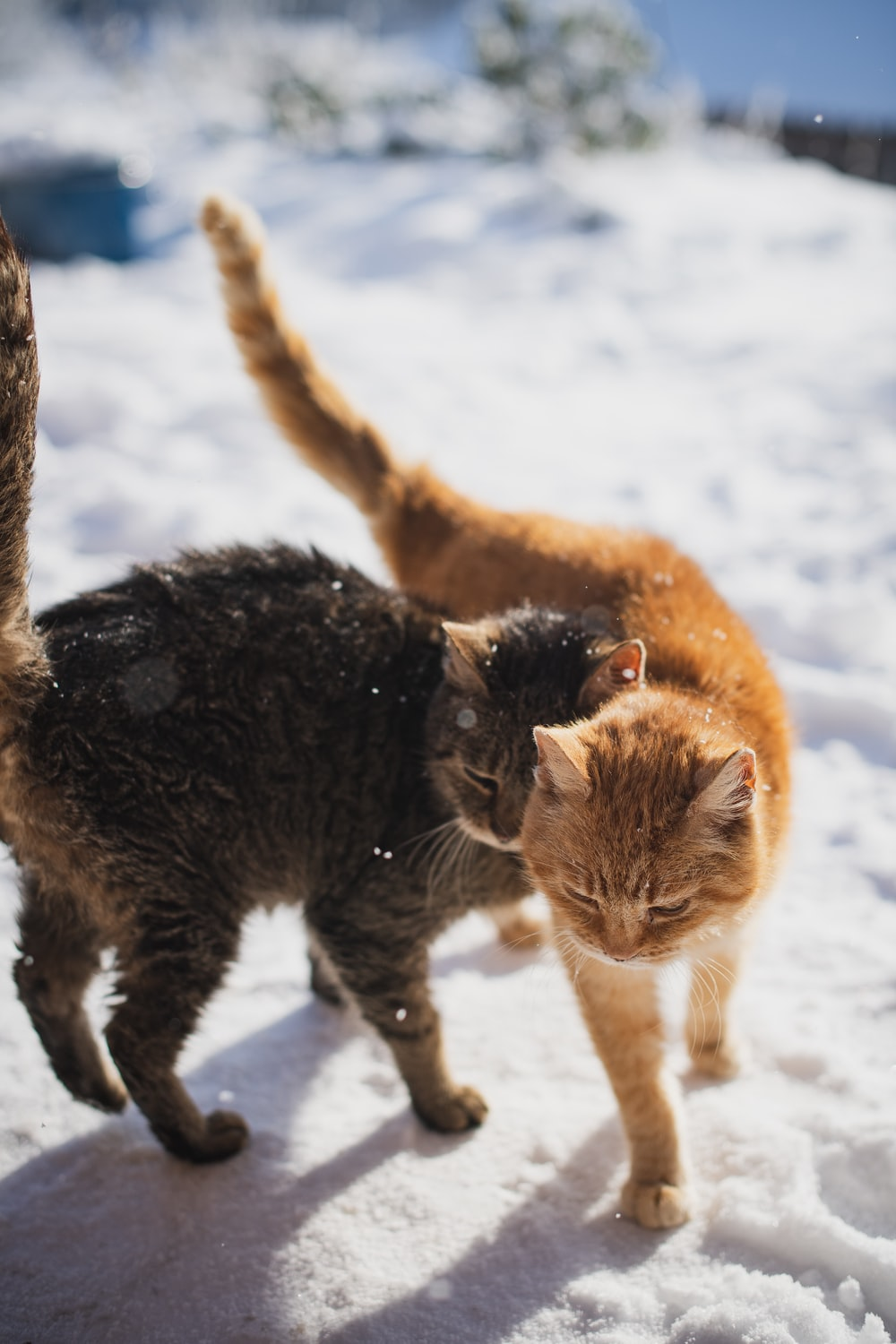 brown tabby cat walking on snow covered ground during daytime