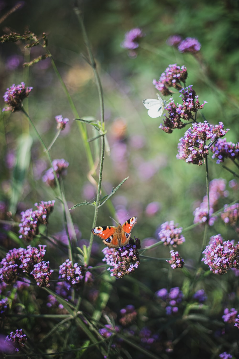orange butterfly perched on purple flower in close up photography during daytime
