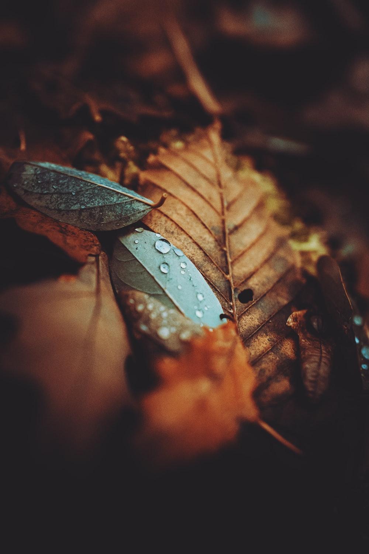 water droplets on brown leaf