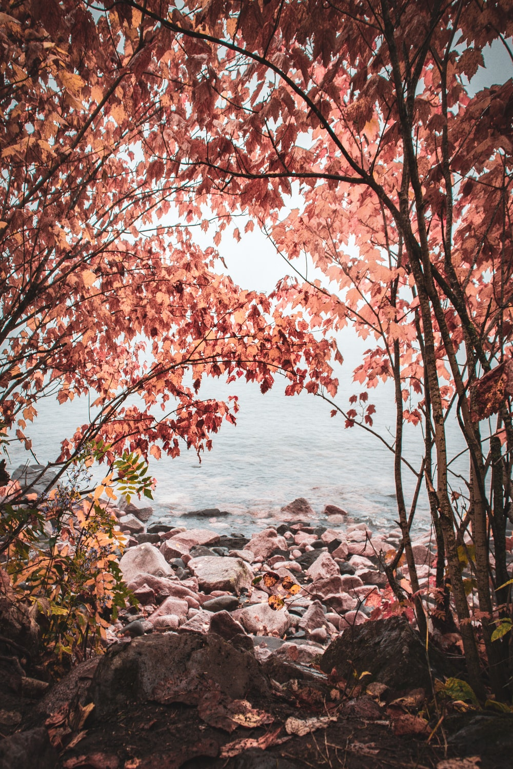 brown leaves tree near body of water during daytime