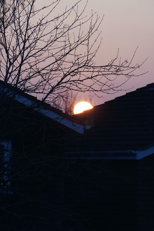 bare tree under orange sunset