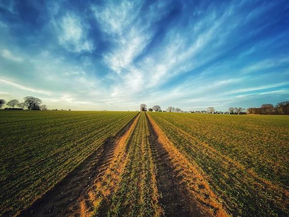 """联合国粮农组织与私营部门""""手拉手"""",推动近东与北非区域的农业粮食体系转型"""