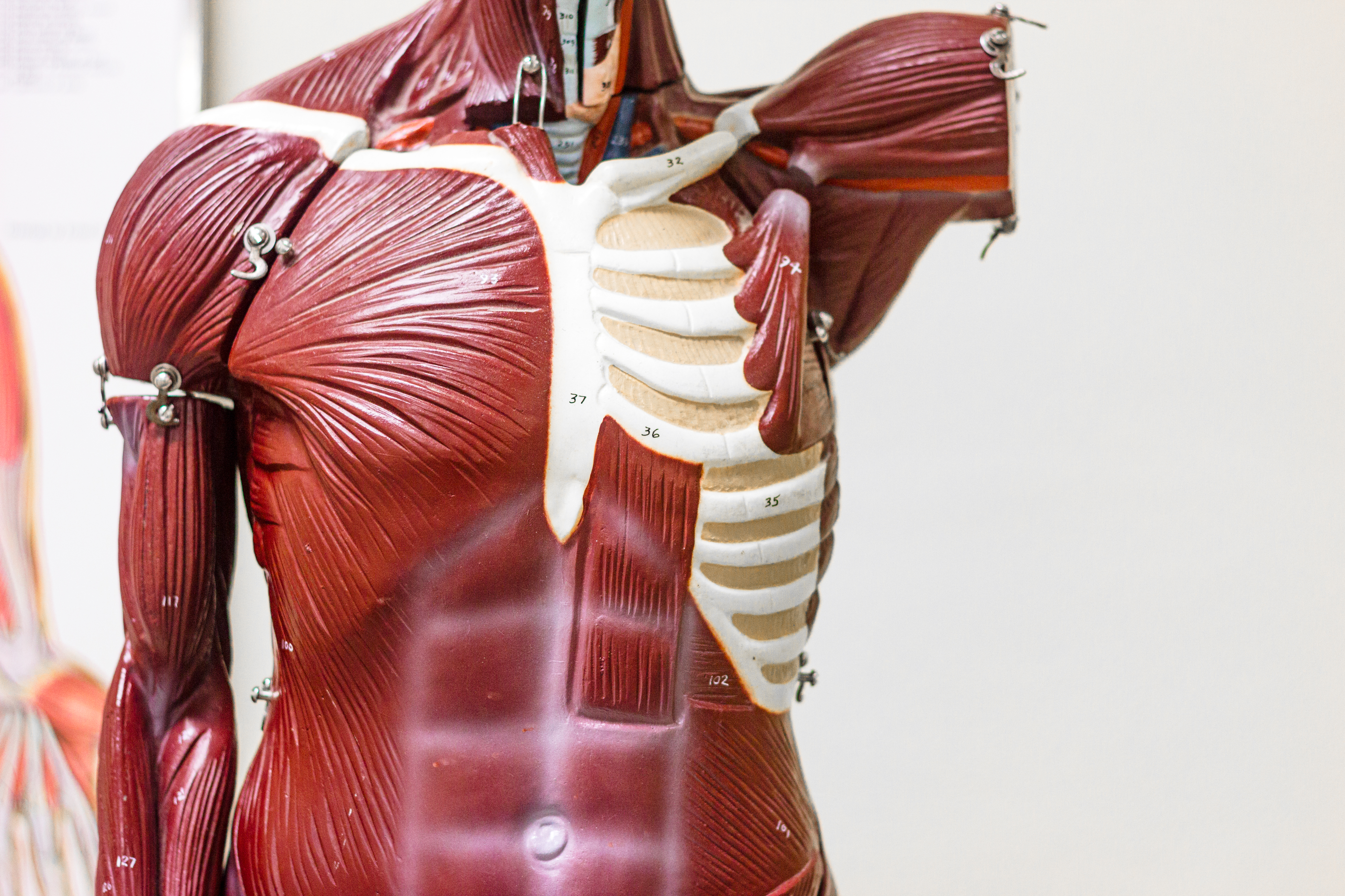 October 22 - 24, 2021 : Foundations of Human Movement & Anatomy for Movement Instructors