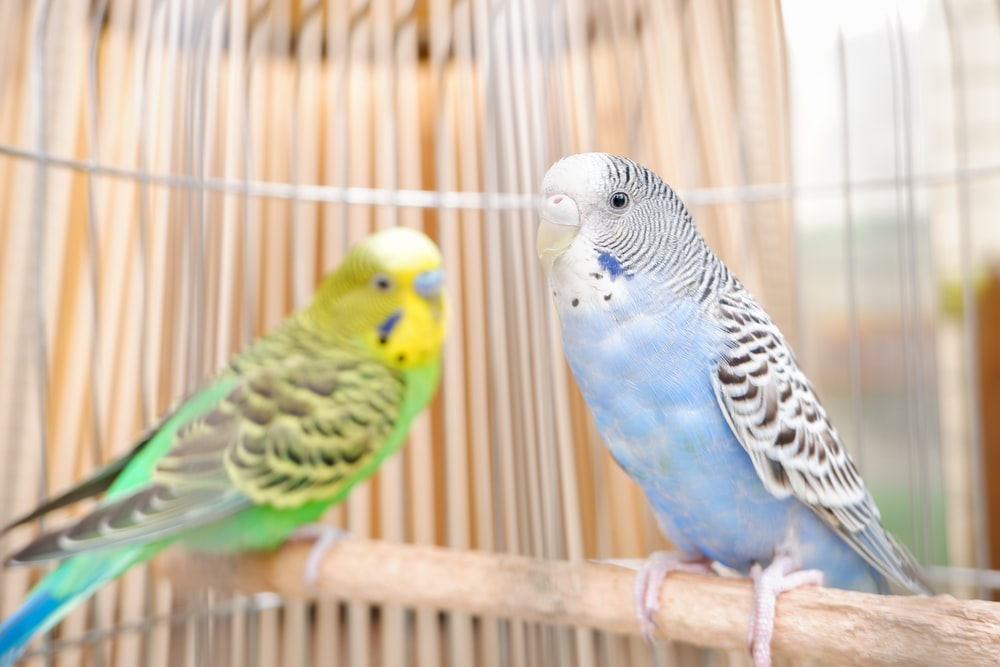 blue yellow and green bird