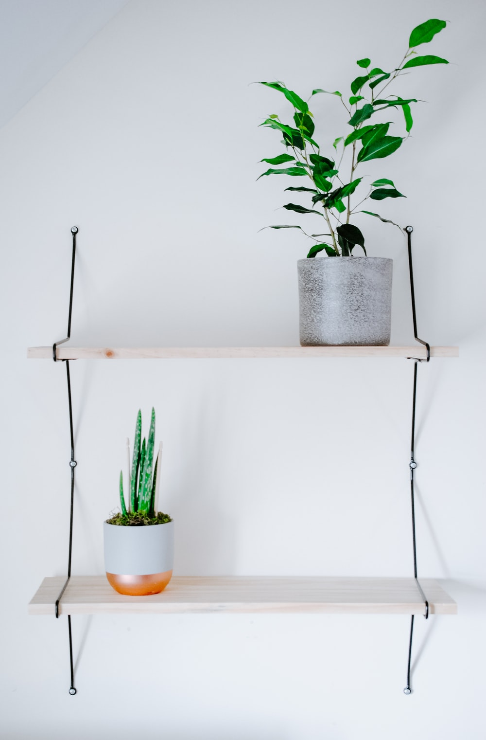 green cactus plant on white table