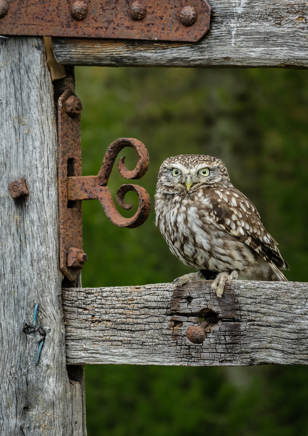 owl on brown wooden fence during daytime