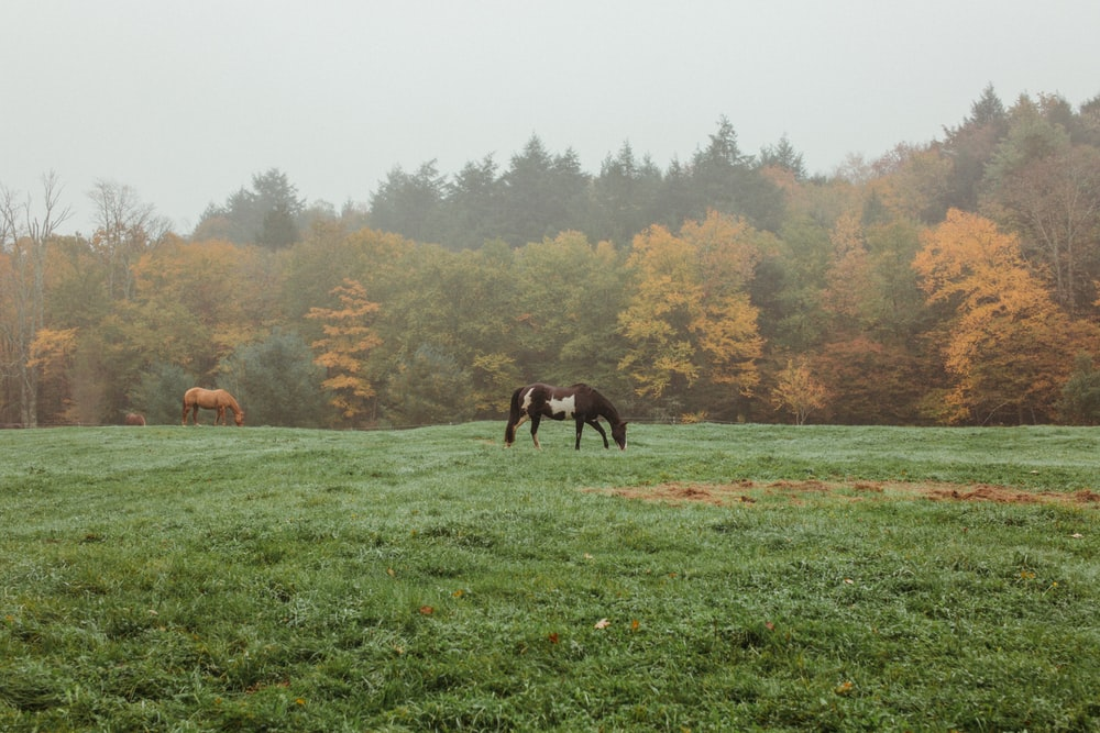 horses eating grass on green grass field during daytime