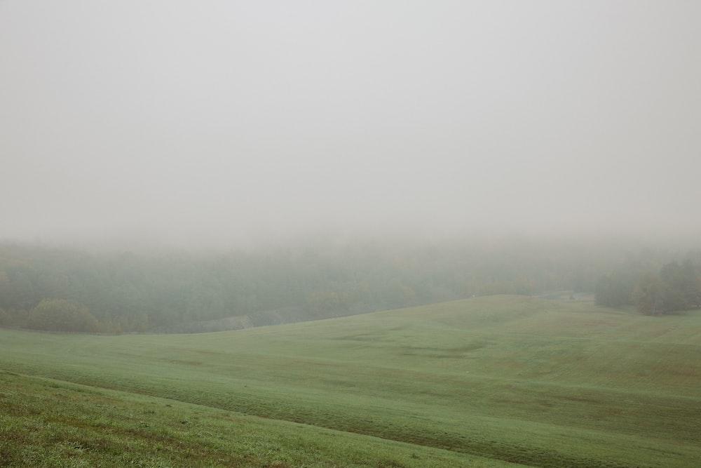 green grass field under white sky during daytime