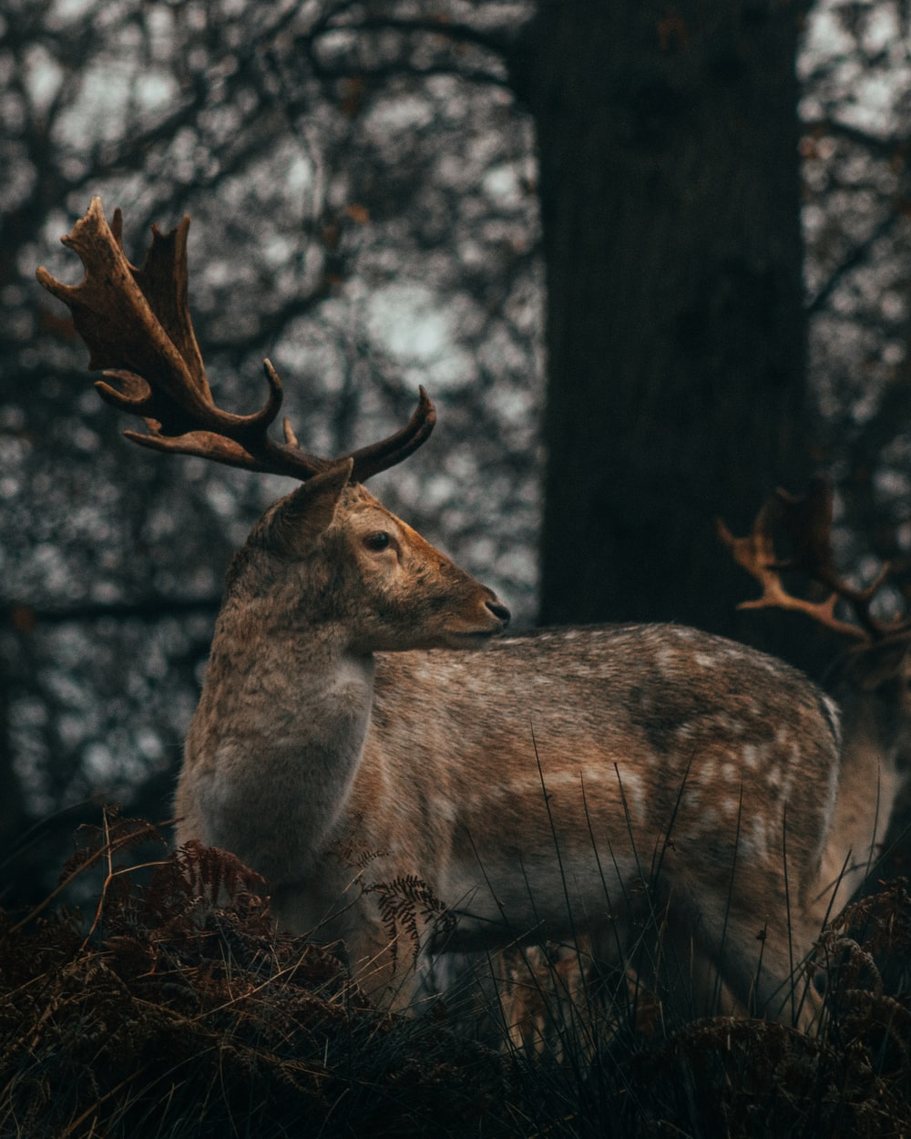 brown deer on brown tree