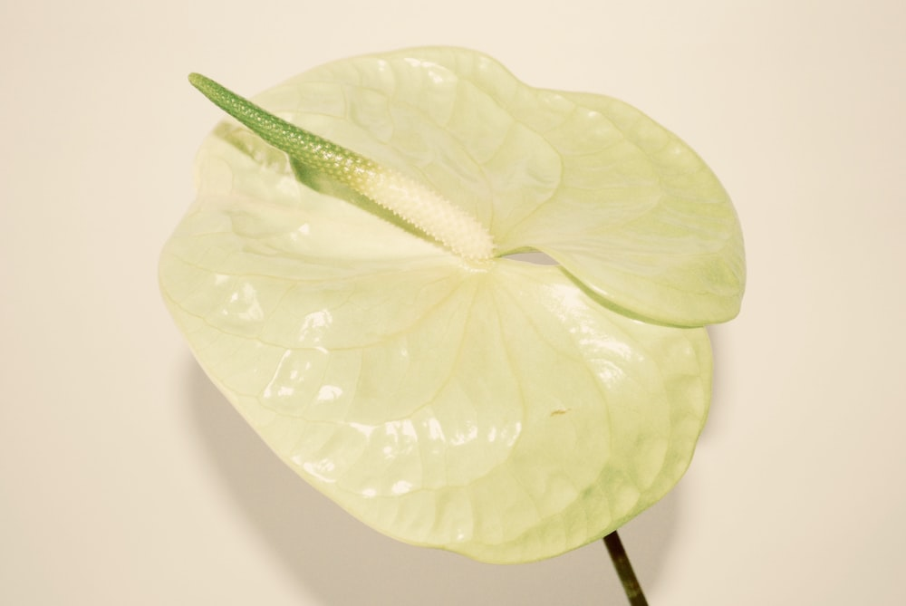 green leaf on white table
