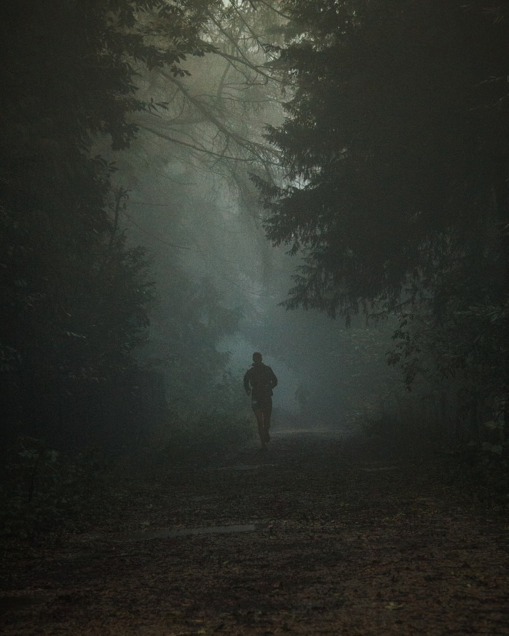 person in black jacket walking on forest