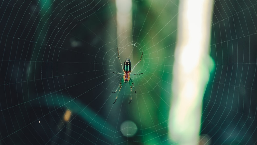 black and yellow spider on web in close up photography during daytime