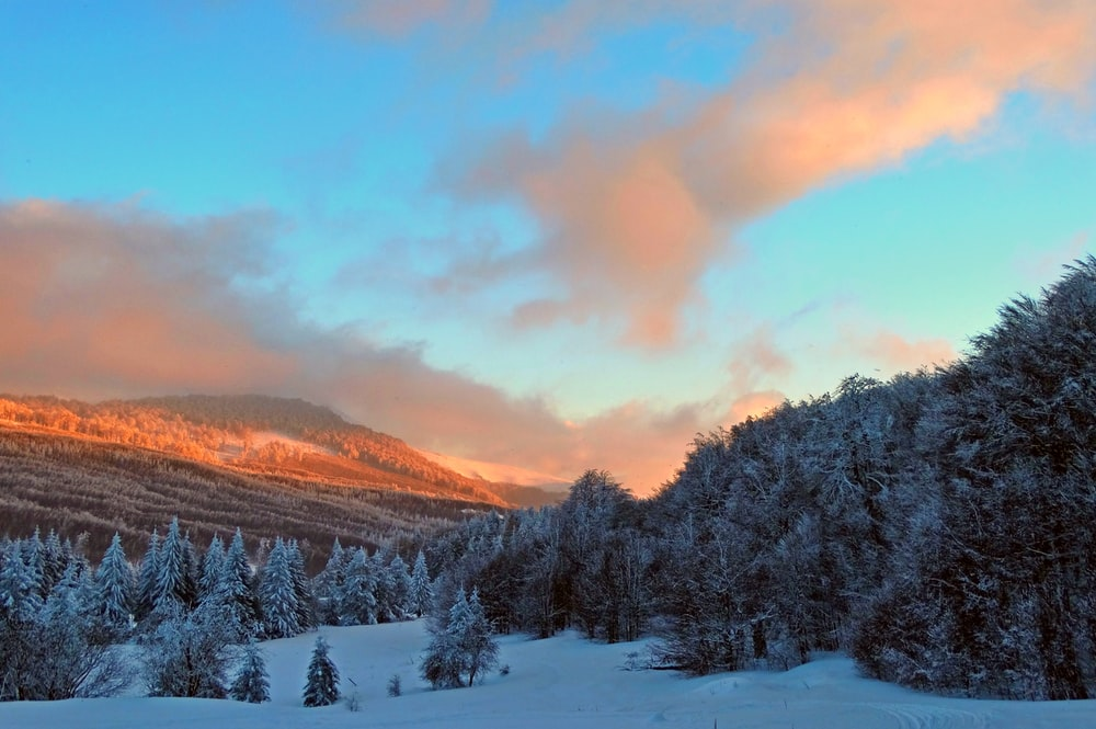 snow covered trees and mountains during sunset