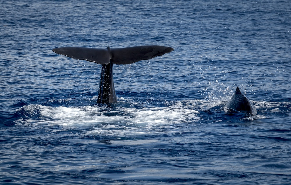 whale tail on body of water during daytime