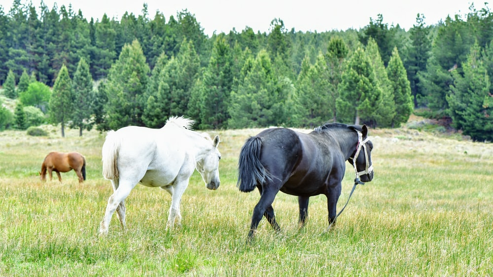 white and black horse on green grass field during daytime