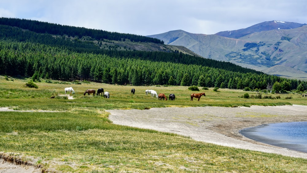 horses on green grass field near green trees and mountains during daytime