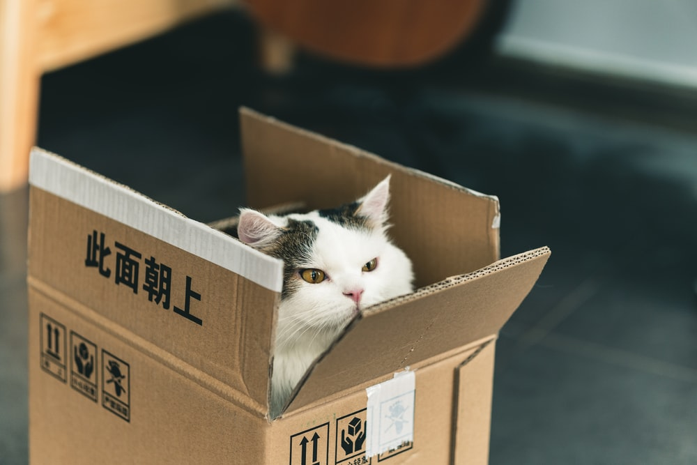tuxedo cat in brown cardboard box