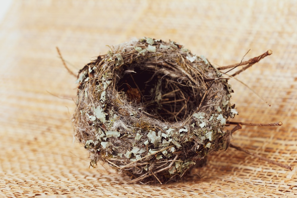 brown nest on brown textile