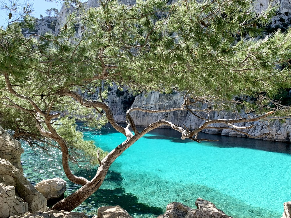green trees beside blue body of water during daytime
