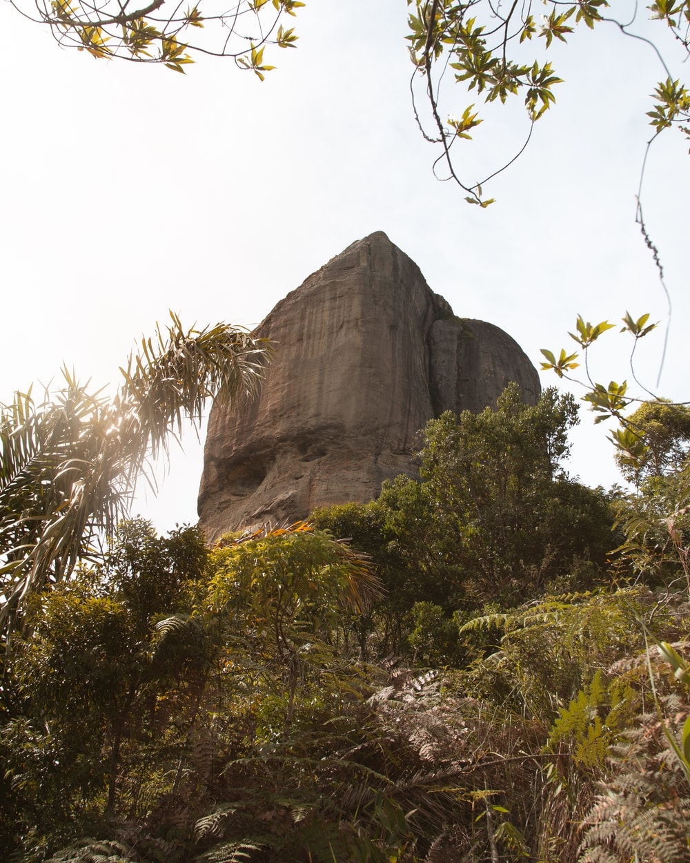 green trees near gray rock formation during daytime