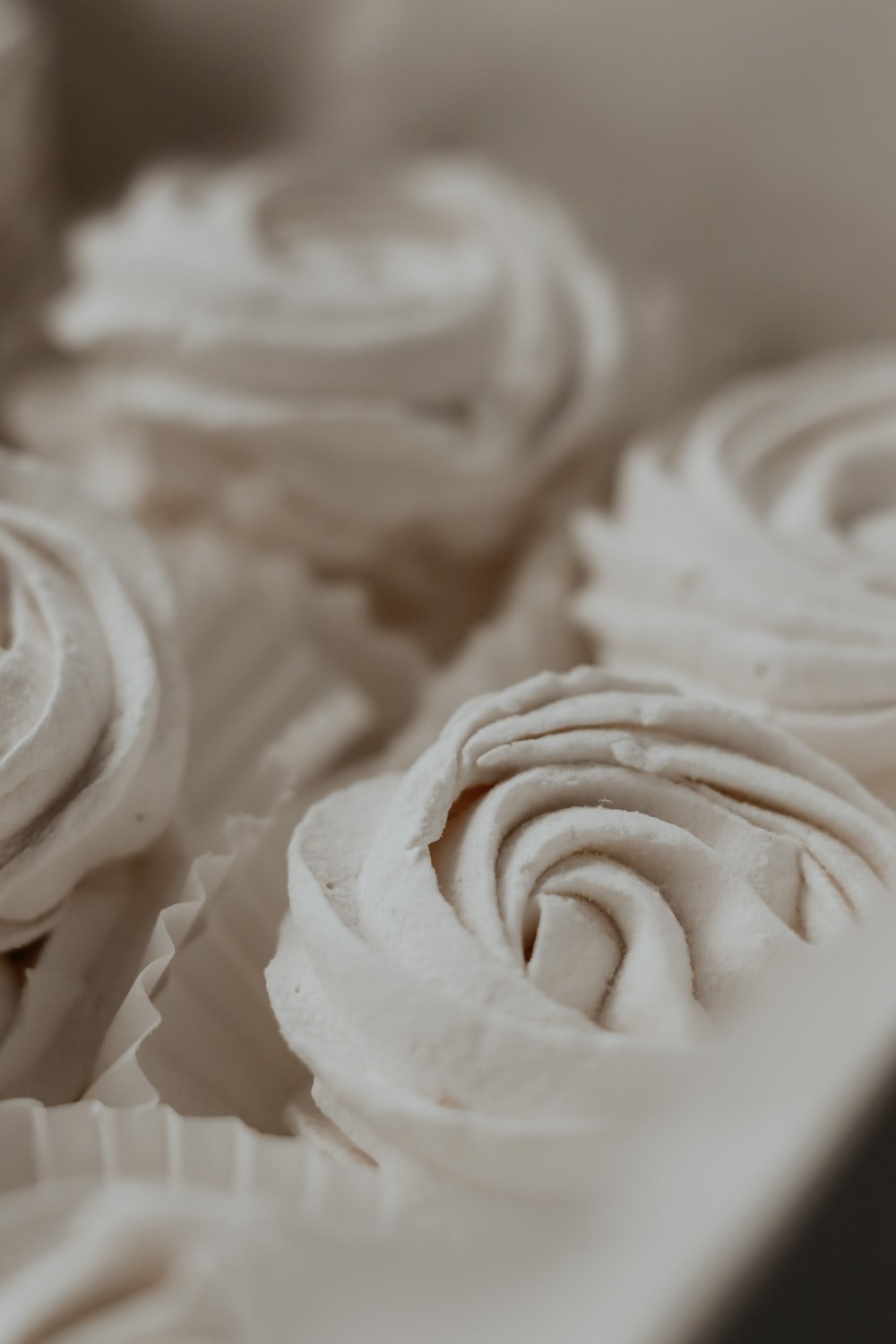 white rose flower in close up photography