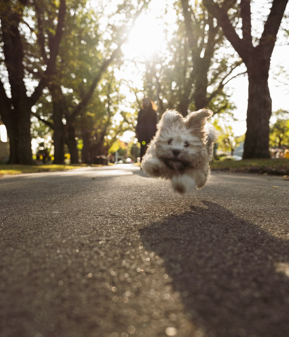 white and brown long coated small dog on road during daytime