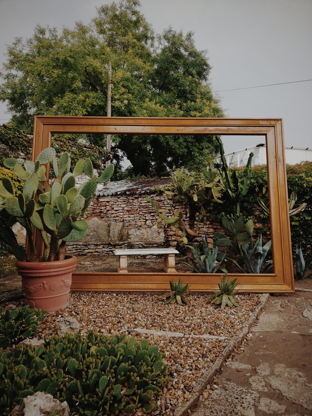green potted plants on brown wooden window frame
