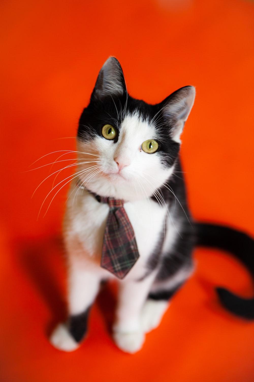 black and white cat on orange textile