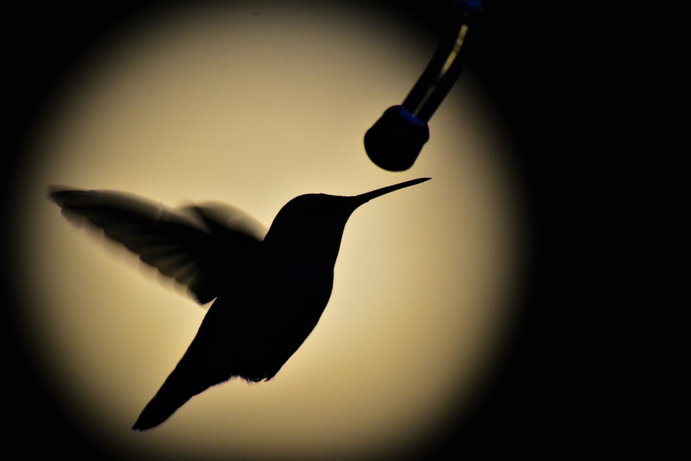 black humming bird flying in the air