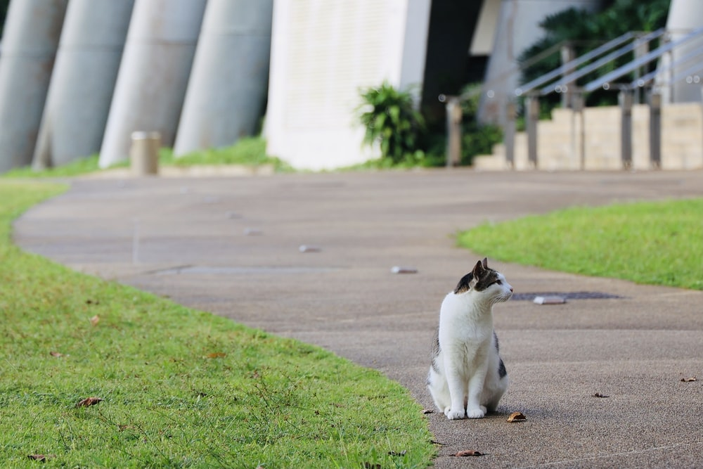 white and black cat on gray concrete road during daytime