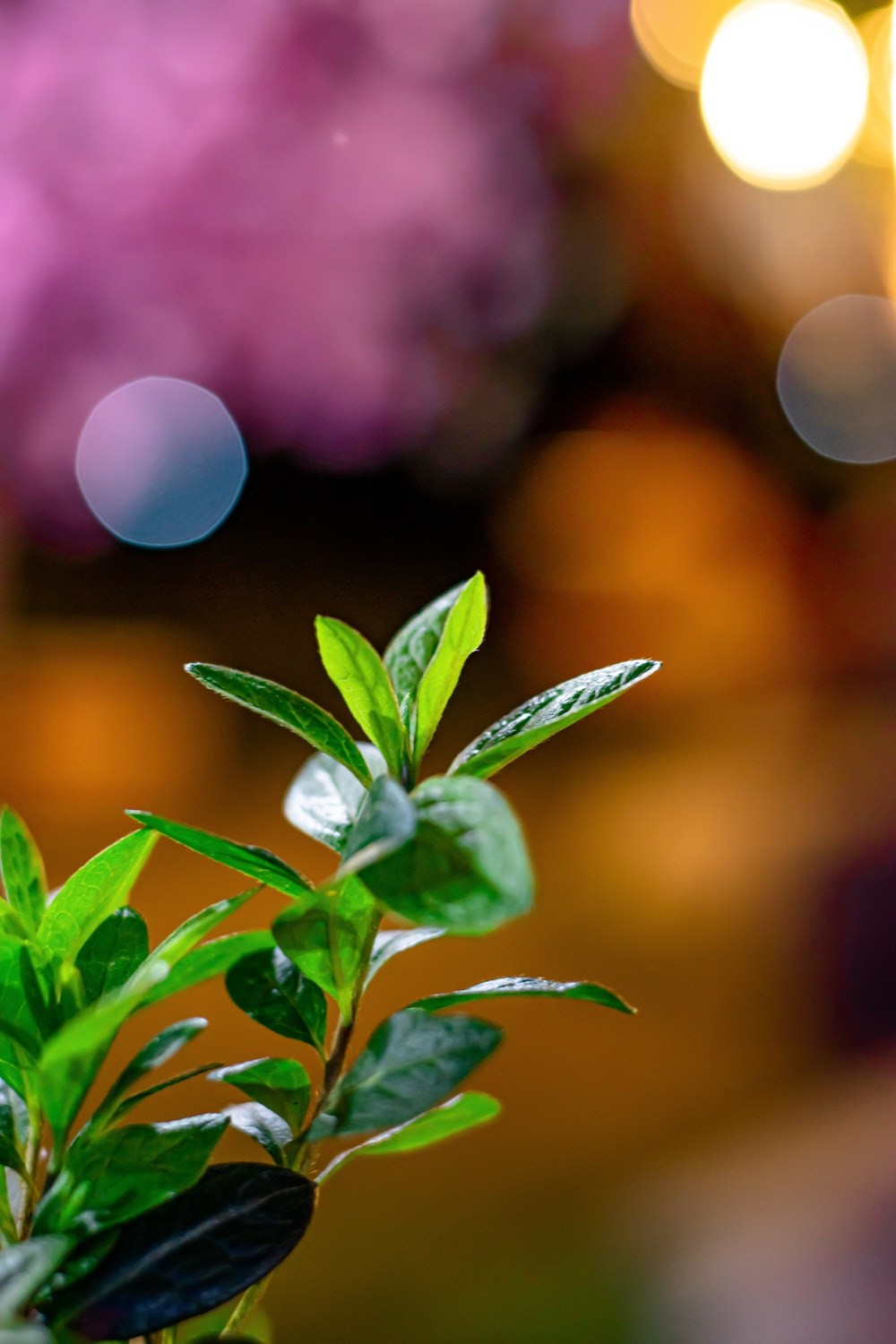 green plant with white flower