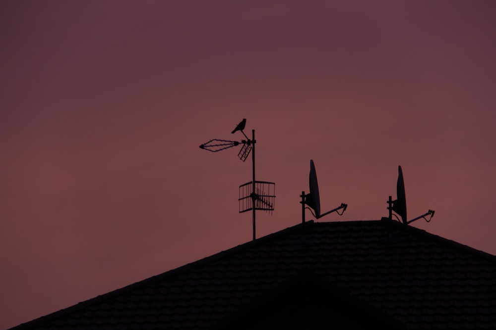 silhouette of birds on roof during sunset