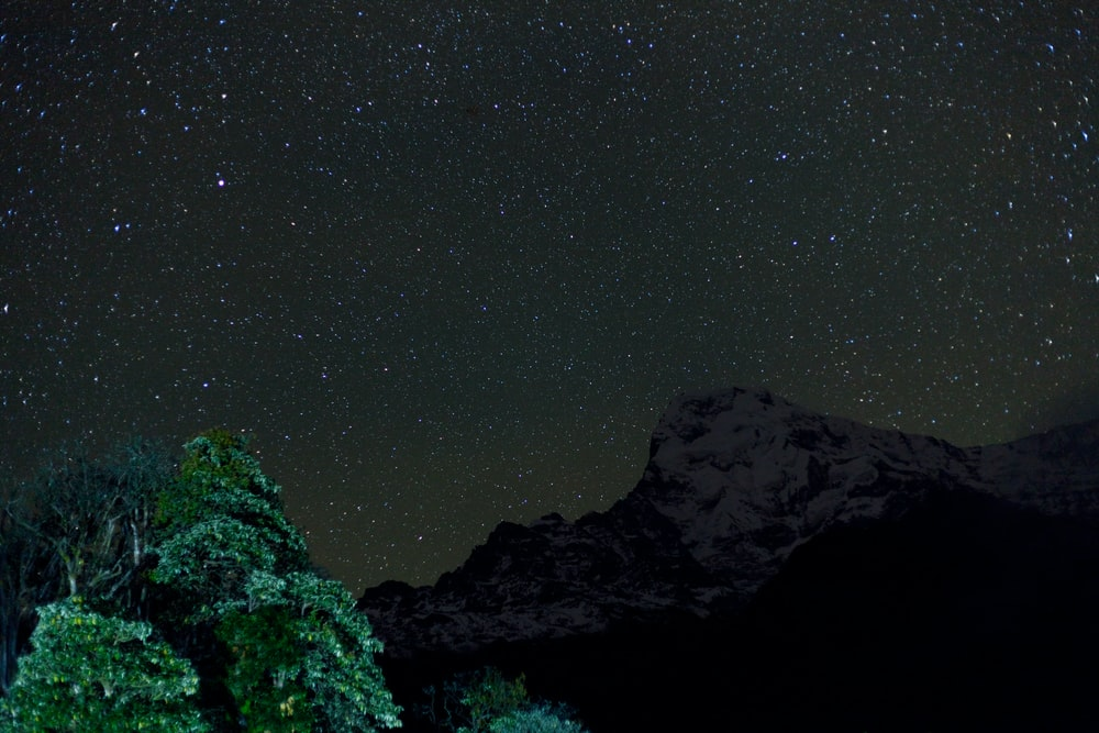 green trees on mountain under starry night