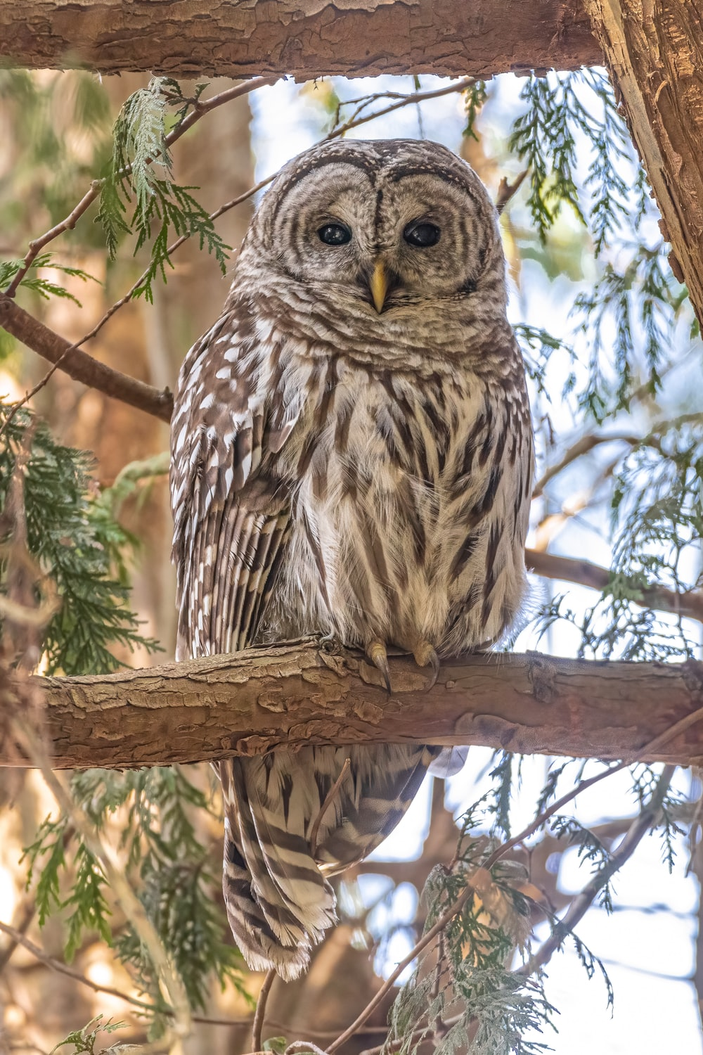 brown owl perched on brown tree branch during daytime