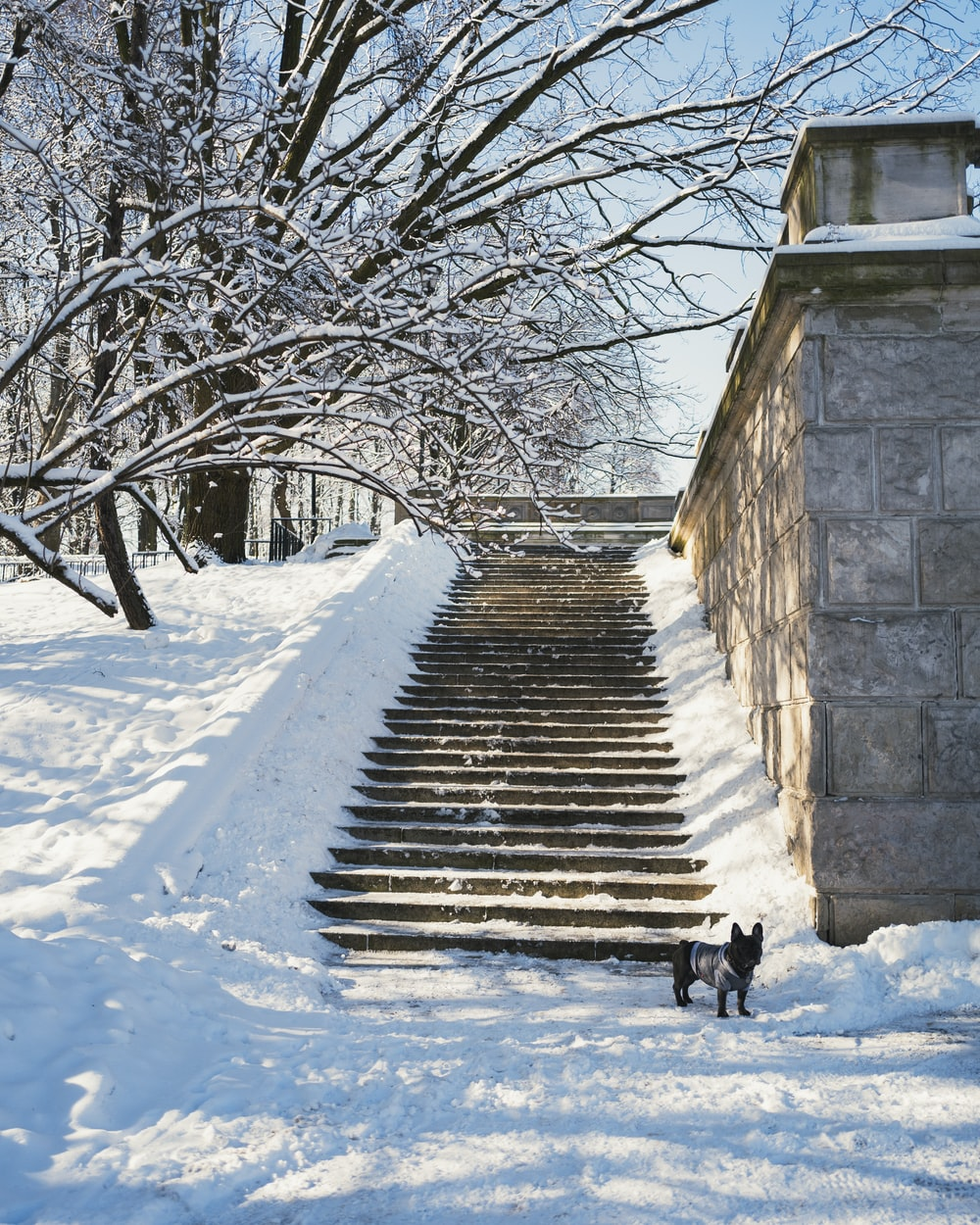 black dog on snow covered stairs