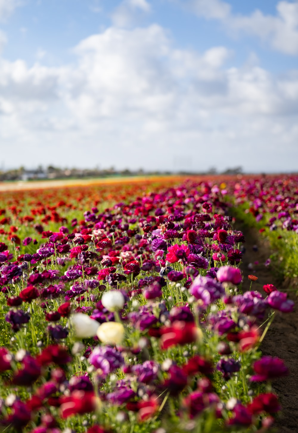 purple and white flower field during daytime