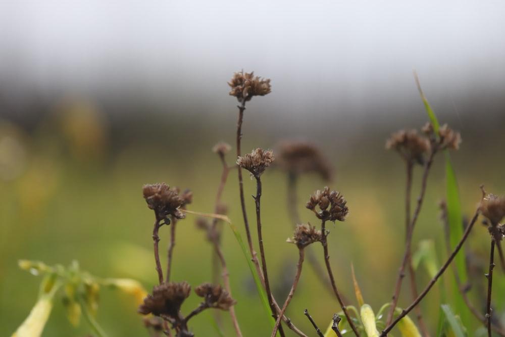 brown flower buds in tilt shift lens