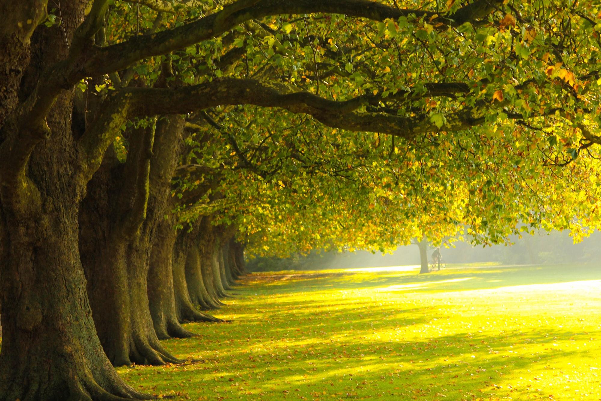 Jesus Green, Cambridge, UK