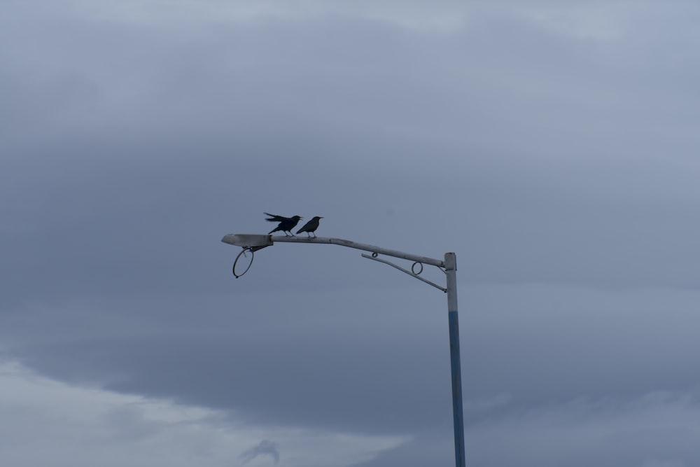 black bird on gray metal stand during daytime
